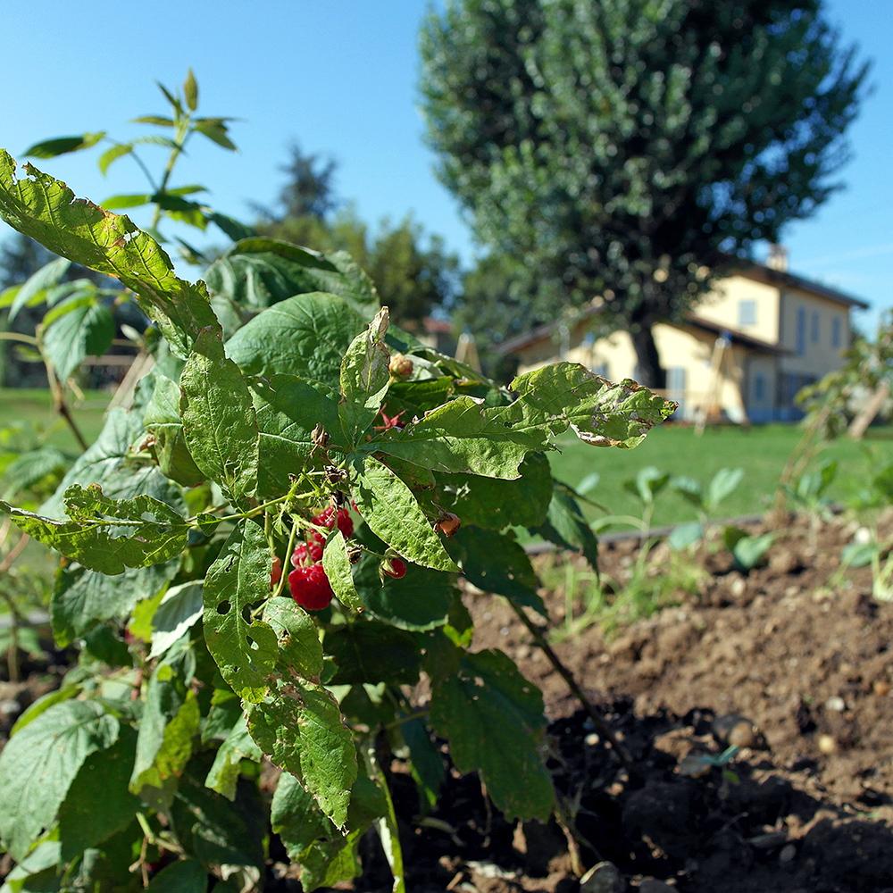 Coltivare la terra, coltivare se stessi